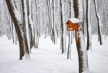 Первый и единственный снег