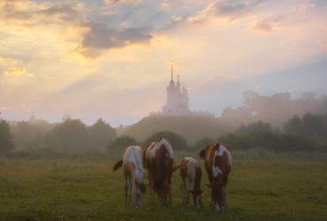 Лошадки в новом свете