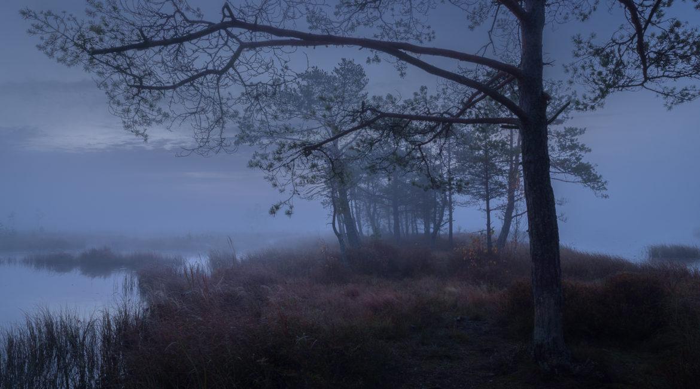 У кикиморы болотной