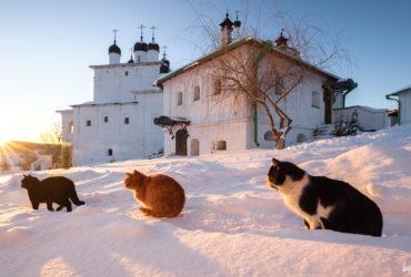 Коты накануне марта